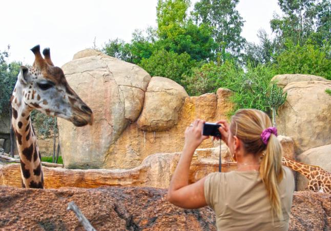 bioparc-jirafa-guidersvalencia
