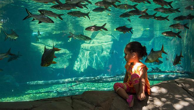 Bioparc peces